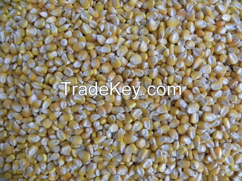 Yellow Corn Feed Exporters from Pakistan