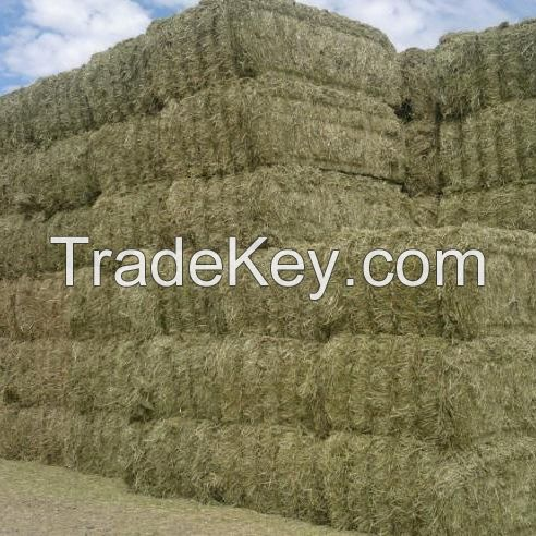 Alfalfa Hay Green and Fresh Best Quality For Sale At Good Price