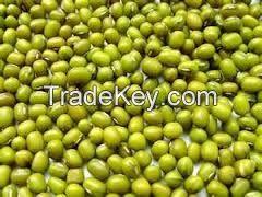 Vigna Beans