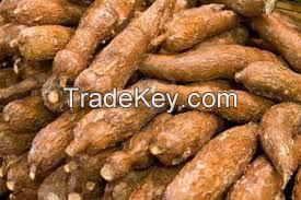 Fresh Cassava