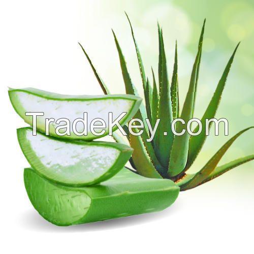 100% Natural Aloe Vera