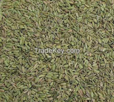 organic fennel seeds 2015