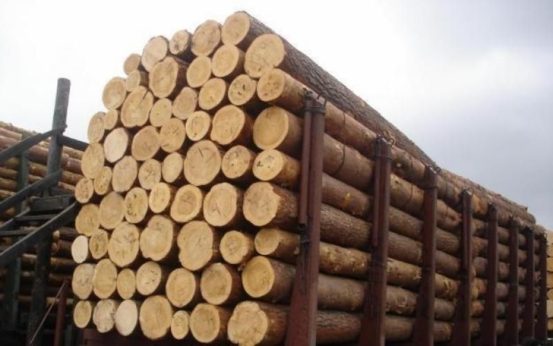 WHITE PINE WOOD LOG FOR SALES