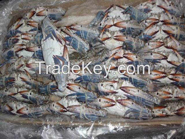 Fresh-Frozen Blue Crab