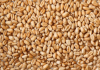 Soft Milling Animal Feed Wheat Grain