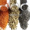 Quality Red Lentils/Green Lentils
