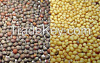 Rape Seed At Affordable Price