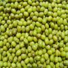 High Quality green mung bean for food