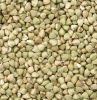 High Quality Buckwheat