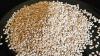 Natural White Hulled Sesame Seeds
