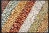 Soybeans Lentils / Organic Beans / Cocoa Beans
