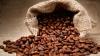 Java Coffee Beans / Liberica Coffee Beans/ Arabica Coffee Beans / Robusta Coffee Beans