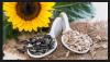 Pumpkin Kernels , Alfalfa Seeds , Castor Seeds , Pigeon Peas