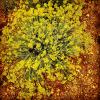 Helichrysum Italicum certified BIO Organic Essential Oil