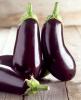 Fresh Eggplant / Fresh Eggplant White, Black and Red Of High Quality