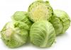 Wholesale Fresh Round Cabbage, Green Cabbage Purple Cabbage, vegetable, lettuce, garden