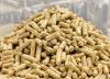 Animal Feed Probiotics