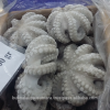 Frozen Rawcut/Cutting Body and Tentacle Octopus