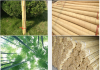 Sell Bamboo Stakes