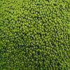 Grade A green mung beans for sale