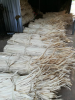Hot Sales Dried Palm Leaves