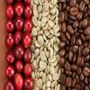 Pure natural and organic US$5 per kg arabica green coffee bean