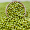 100% wholesale Green mung beans for sprouting
