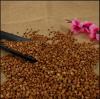 Wholesale High Quality Buckwheat With Best Price
