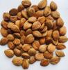 Apricot Kernels Organic Raw Dried Bitter