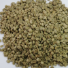 100% Best Quality Green Arabica Coffee Beans for sale