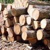padouk wood sale