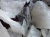 transparent silica chips