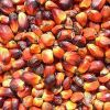 Palm Kernel Oil For Sale