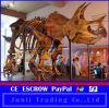Sell museum indoor dinosaur skeleton of Triceratops