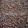Mustard Seed for sale