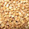 New Roasted Buckwheat Kernels, Inner Mongolia, China