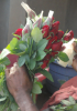 fresh rose & fresh roses