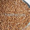 High Quality Teff Grain