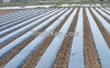 white and black mulch film for plastic agricultural planting