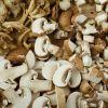 Assorted edible mushrooms