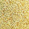 Quinoa Grain Seeds
