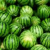 Fresh Water Melons
