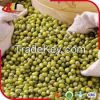 2015 crop green mung bean