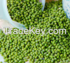 Green Bean / Mung Beans For Sale