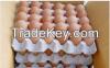 Fresh Chicken eggs, Egg yolk powder and Chicken Feed