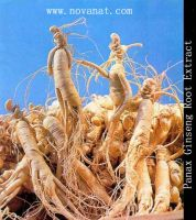 Sell Panax Ginseng Extract