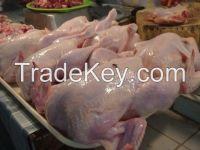 Halal Frozen Chicken Parts ( Best Price )