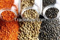 Red Lentils, Green Lentils, Yellow Pea, Brown Lentils, Chickpea, Mung Beans