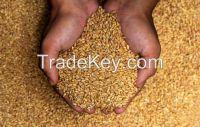 Wheat, 40% Discount, Cheap