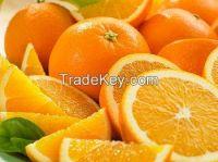 fresh orange for sell